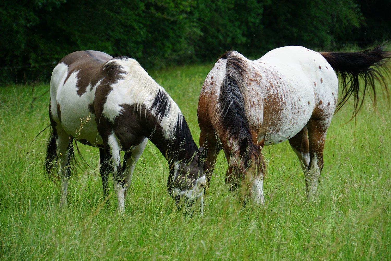 americanhorsesvalley