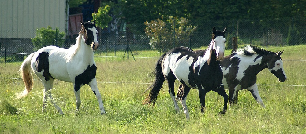 American Horse`s Valley